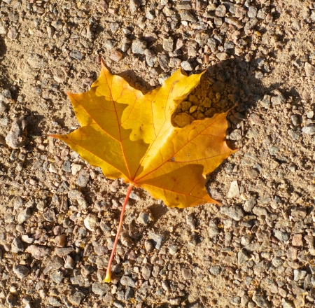 maple leaf on earth Stock Photo - 15247920