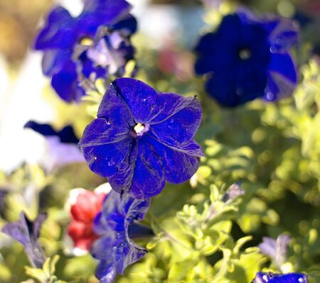 tripped: blue flower Campanula ad dry sunny day