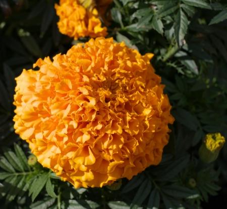 Yellow Flowers Stock Photo - 18602157