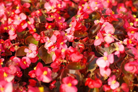 red little flowers photo