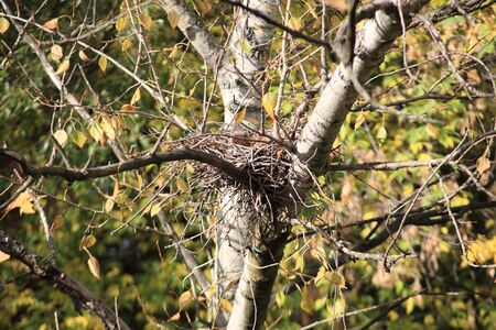 convolute: convolute nest on tree