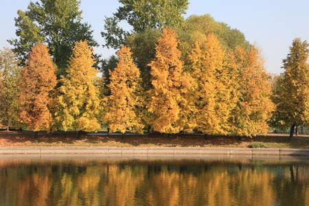 respite: Trees in city park