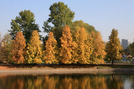 respite: city park in gold fall
