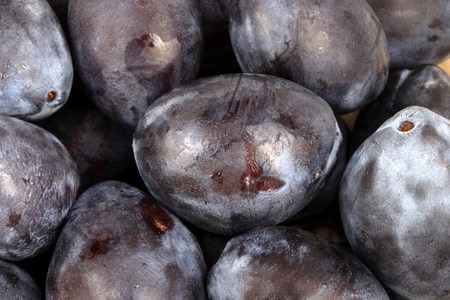 many blue plum at day Imagens - 77476339