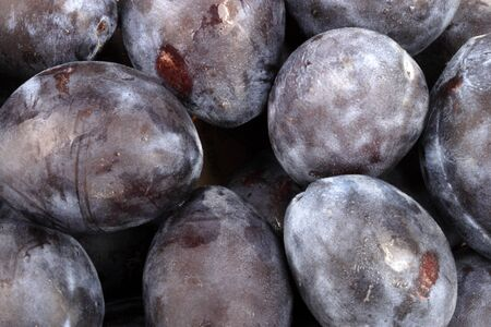 many blue plum at day Imagens - 81239873