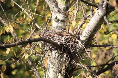 convolute: convolute nest on tree
