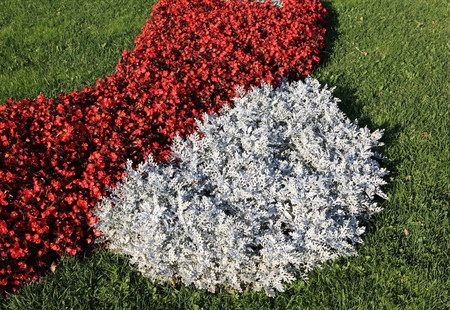 grey rug: red little flowers at day