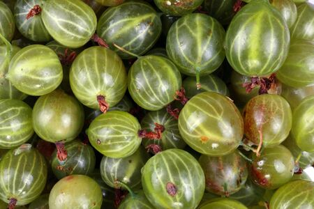 gooseberries summary