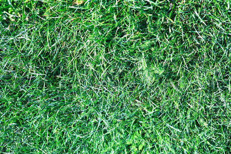 green grass for background, spetember, daily time Stok Fotoğraf