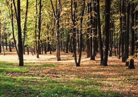 trees in autumn, september, daily time, park Reklamní fotografie