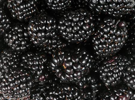 many BlackBerry at day Reklamní fotografie