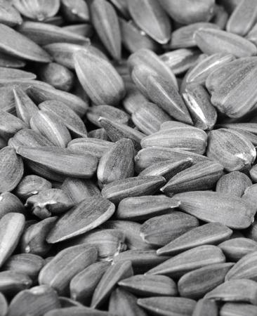 many of sunflower seeds Stock Photo
