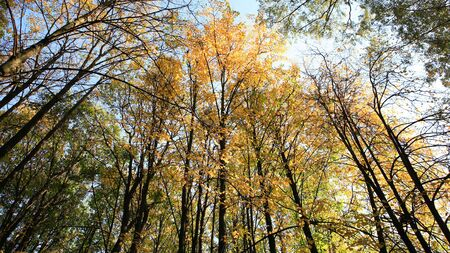 trees in autumn on sky background, spetember Banque d'images - 129474378
