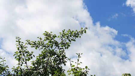 cloud on blue sky Banque d'images - 129474441
