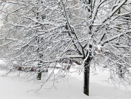 city park after snowfall at day