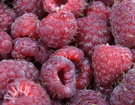 many raspberry at day Stock Photo