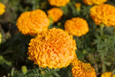 Yellow Flowers Reklamní fotografie