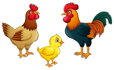 Chicken family on white background Foto de archivo - 116619771