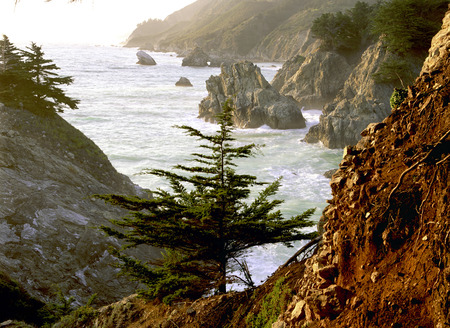 The Rocky Northwest Beach With A Tree In The Foreground