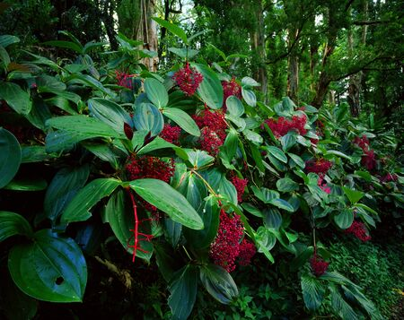 Tropical Plants Bloom In An Asian Forest LANG_EVOIMAGES