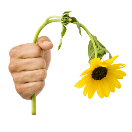 Close-Up Of A Hand Holding A Dead Flower LANG_EVOIMAGES