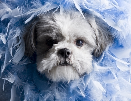 Close-Up Of A Puppy Covered With Feathers