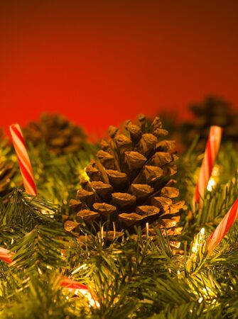 pine wreaths: Close-Up Of A Pine Cones On A Christmas Tree