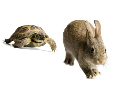 Tortoise And Hare Racing LANG_EVOIMAGES