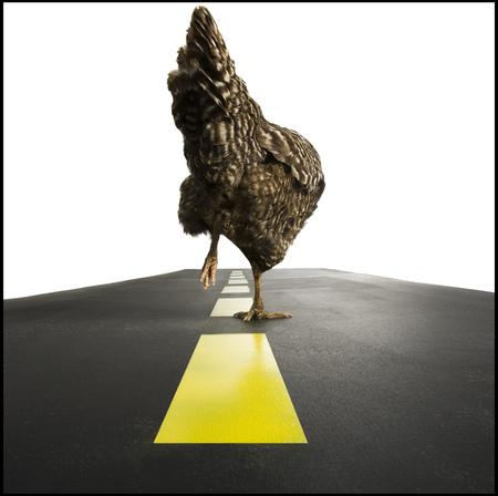 hurried: Chicken Walking On Road