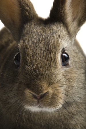 nose close up: Close-Up Of Rabbit Face