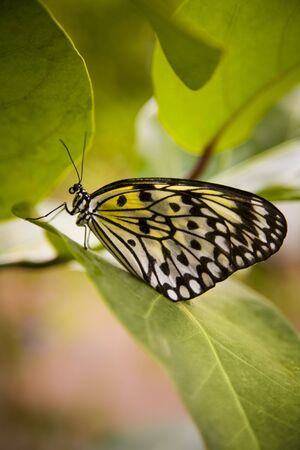 Close-Up Of A Butterfly On A Leaf LANG_EVOIMAGES