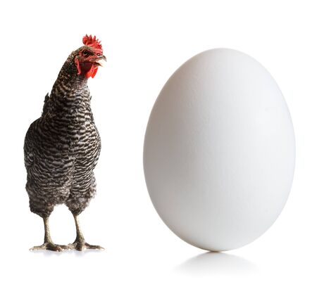 Chicken And An Egg LANG_EVOIMAGES
