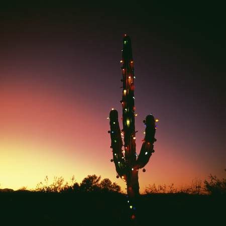 cactus with christmas lights stock photo 87370471