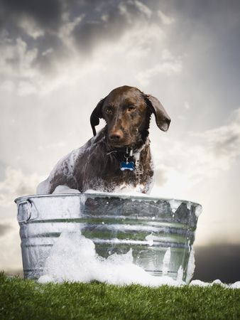 wash: Dog In Wash Basin With Suds Outdoors On Cloudy Day