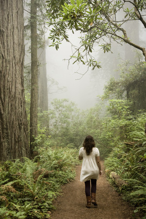 Woman Walking Through A Forest Of Giant Redwoods