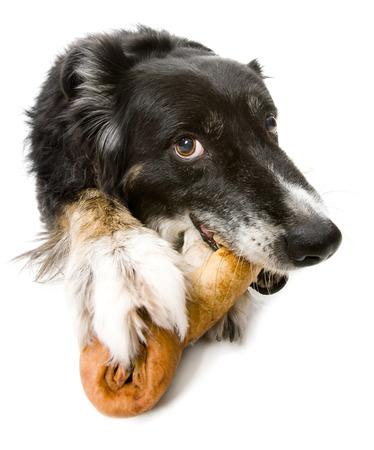 Dog Lying Down On Rawhide Bone LANG_EVOIMAGES