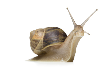 Close-Up Of A Snail On A White Background,Silhouette