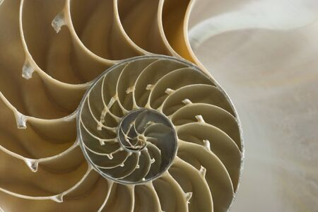 volute: Close-Up Of The Cross Section Of A Nautilus Shell LANG_EVOIMAGES