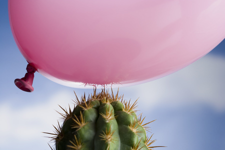 Close-Up Of A Balloon Above A Cactus LANG_EVOIMAGES