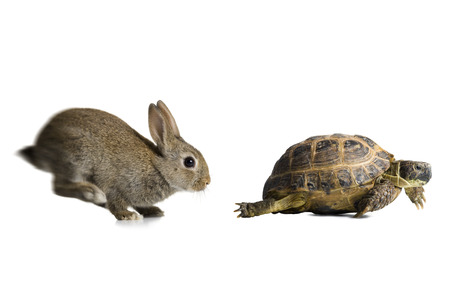 quickness: Tortoise And Hare Racing LANG_EVOIMAGES