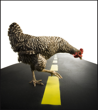 hurried: Chicken Crossing Road