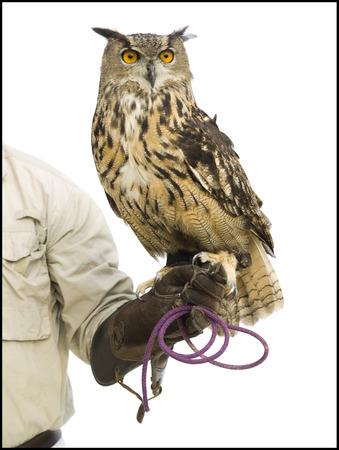 handlers: Animal Handler With Owl LANG_EVOIMAGES