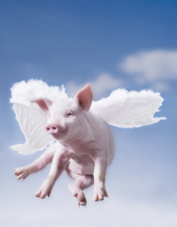 Pig With Wings Flying With Blue Sky LANG_EVOIMAGES