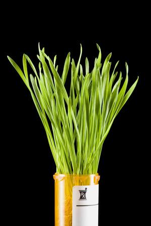 holistic view: Prescription Bottle With Grass LANG_EVOIMAGES