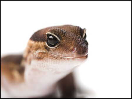 Closeup Of Lizard LANG_EVOIMAGES