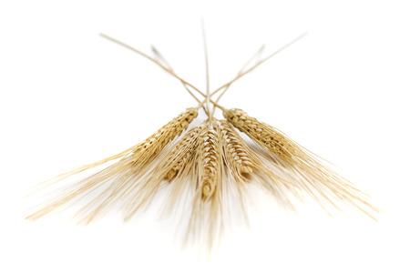 Close-Up Of Wheat Stalks