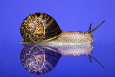 spectral colour: Close-Up Of A Snail On A Blue Background LANG_EVOIMAGES