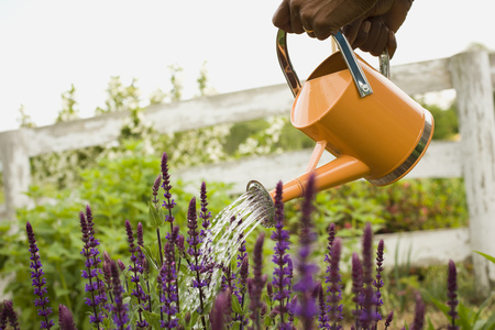 Close-Up Of A PersonS Hand Watering Flowers