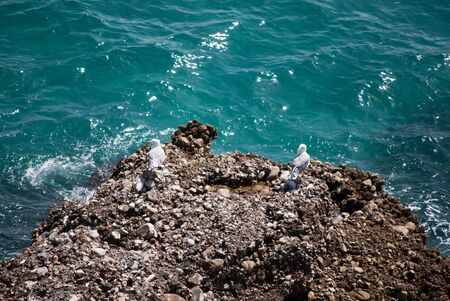 Seagulls on a rock on the coast of Nerja, Malaga (Spain)  photo