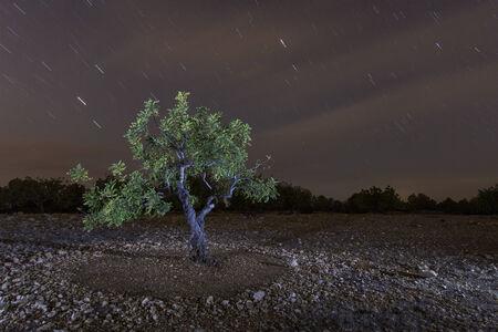 carob: carob to starlight Stock Photo